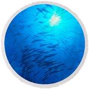 Micronesia Marine Life Round Beach Towel