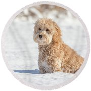 Mini Golden Doodle  Round Beach Towel