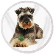 Miniature Schnauzer Round Beach Towel by Jane Burton
