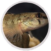 Mobile Logperch Percina Kathae Round Beach Towel