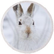Mountain Hare In The Snow - Lepus Timidus  #3 Round Beach Towel
