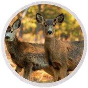 Mule Deer In The Woods Round Beach Towel