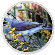 Noisy Miner In Oz Round Beach Towel
