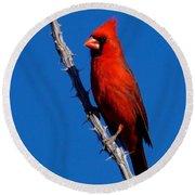 Northern Cardinal Round Beach Towel
