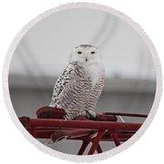 Snowy Owl 9470 Round Beach Towel