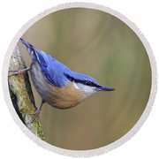 Nuthatch -- Round Beach Towel