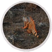 Orange Iguana Round Beach Towel