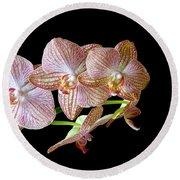 Orchid Phalaenopsis Flower Round Beach Towel