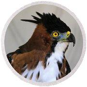 Ornate Hawk-eagle Round Beach Towel