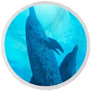 Pair Of Spotted Dolphins Round Beach Towel