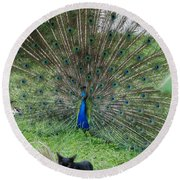 2 Peacocks And A Black Pussy Cat Round Beach Towel