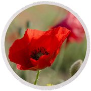 Poppies In Field In Spring Round Beach Towel