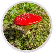 Red And White Potted Toadstool Round Beach Towel