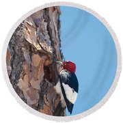 Red Headed Woodpecker Round Beach Towel