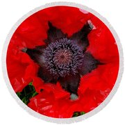 Red Poppy Photograph Round Beach Towel