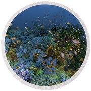 Reef Scene With Coral And Fish Round Beach Towel by Mathieu Meur