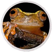 Ross Allens Treefrog Round Beach Towel