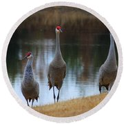 Sandhill Crane Family By Pond Round Beach Towel