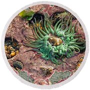 Sea Anemones Round Beach Towel