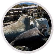 Sea Lions At Sea Lion Cove State Marine Conservation Area Round Beach Towel