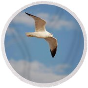 2- Seagull Round Beach Towel