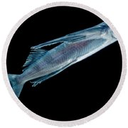 Spotfin Flyingfish Round Beach Towel