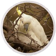 Sulfur Crested Cockatoo Round Beach Towel
