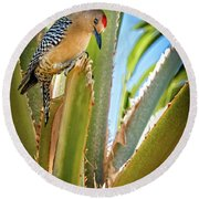 The Gila Woodpecker Round Beach Towel
