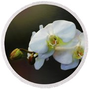 White Orchid - Doritaenopsis Orchid Round Beach Towel