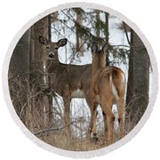 White-tailed Deer Round Beach Towel