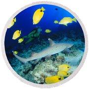 Whitetip Reef Shark Round Beach Towel