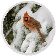 Winter Cardinal Round Beach Towel