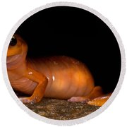Yellow-eye Ensatina Salamander Round Beach Towel