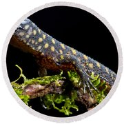 Yellow Spotted Tropical Night Lizard Round Beach Towel