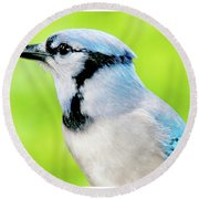 Blue Jay, Animal Portrait Round Beach Towel