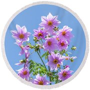 Fully Bloomed Pink Dahlia Imperialis At Garden In November Round Beach Towel