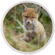 Red Fox Cub Round Beach Towel