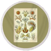 Vintage Zoological Round Beach Towel