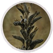 2016 Horicon Marsh - Seed Pods Unfurled Round Beach Towel