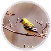 2164 - Goldfinch Round Beach Towel
