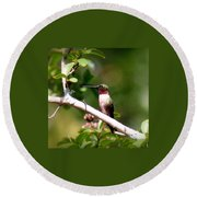 2274 - Hummingbird Round Beach Towel