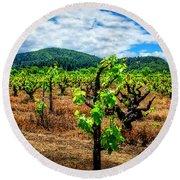 2638- Coffaro Vineyard Round Beach Towel