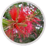 Australia - Red Flower Of The Callistemon Round Beach Towel