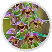 Helleborine On North Country Trail In Pictured Rocks National Lakeshore-michigan  Round Beach Towel