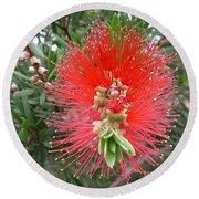 Australia - Callistemon Red Flower Round Beach Towel