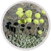 2da5927-dc Sulpher Flower Round Beach Towel