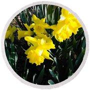 A Daffodil Exhibit Round Beach Towel