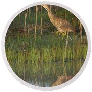 American Bittern Along The Shore Round Beach Towel