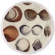 Aquatic Animals - Seafood - Shells - Mussels Round Beach Towel