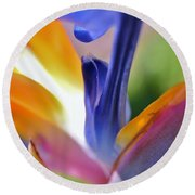 3 Bird Of Paradise Macro Round Beach Towel